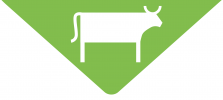 AgriFarmProducts_CowIcon