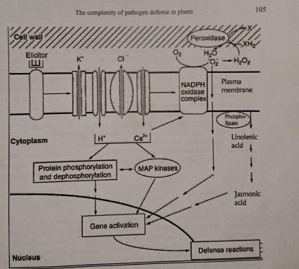 The complexity of Pathogen Defense in Plants(Somssich and Hahbrock,1998)