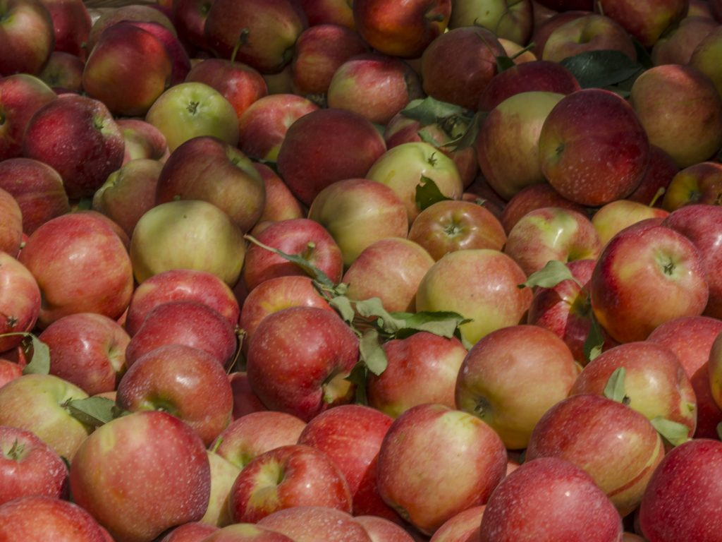 Idaho state department of agriculture idaho state department of bin of fresh apples xflitez Images