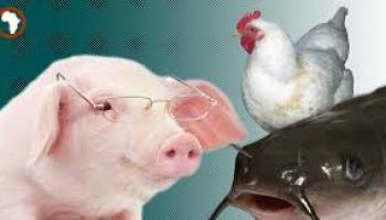Brief History and Roles of Animal Production in Nigeria