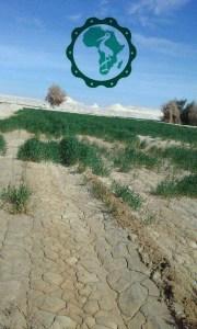 الاملاح في التربة