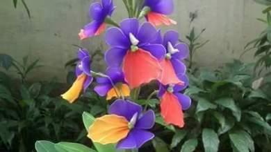 Photo of نبتة الجاردينيا المنزلية .. كيف تعتني بها ومعلومات أخري
