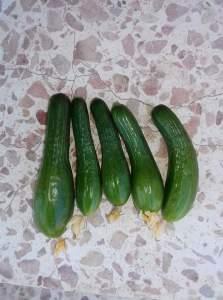 اعراض نقص البوتاسيوم علي النبات