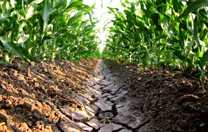 Sales del suelo su importancia y manejo agrichem for A que se denomina suelo