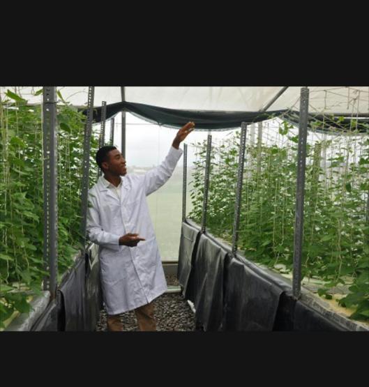 Aeroponics farming in Nigeria
