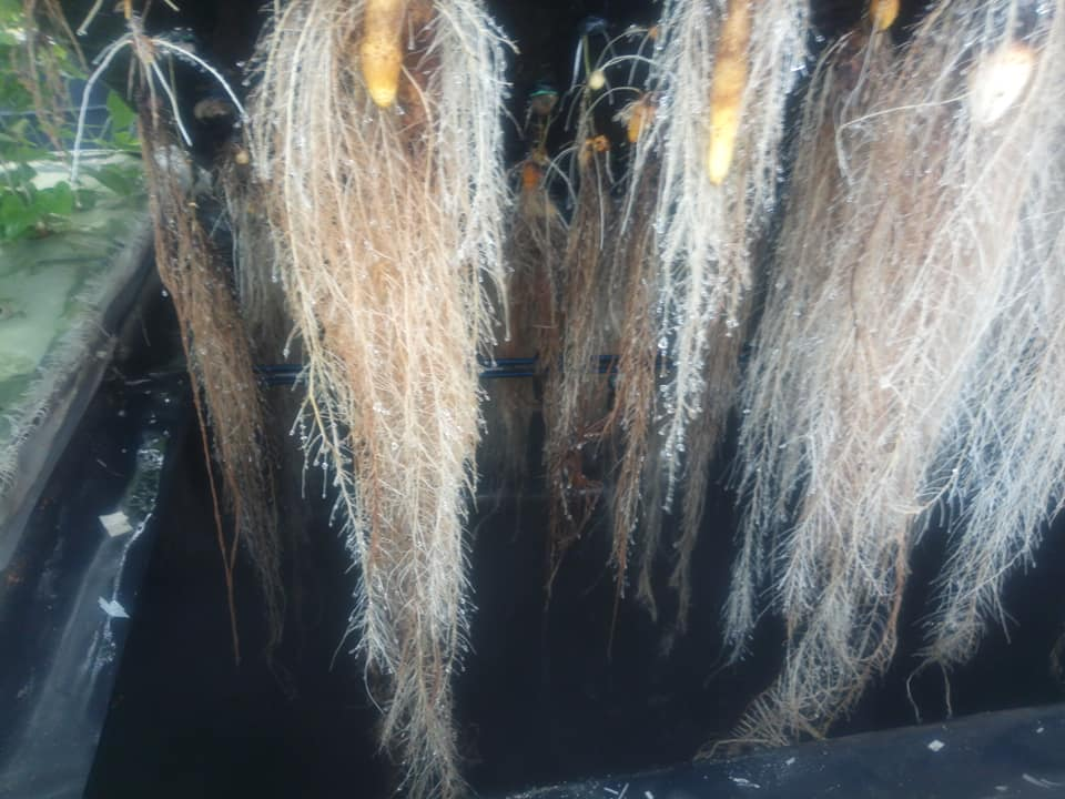 Hydroponics farming system