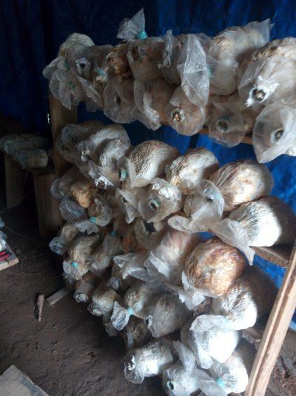 Mushroom housing
