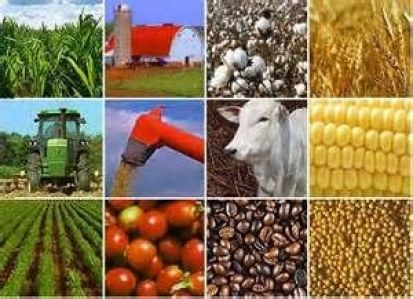 agro commodity trading