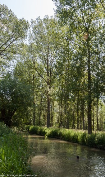 Tree lined banks of the Windrush