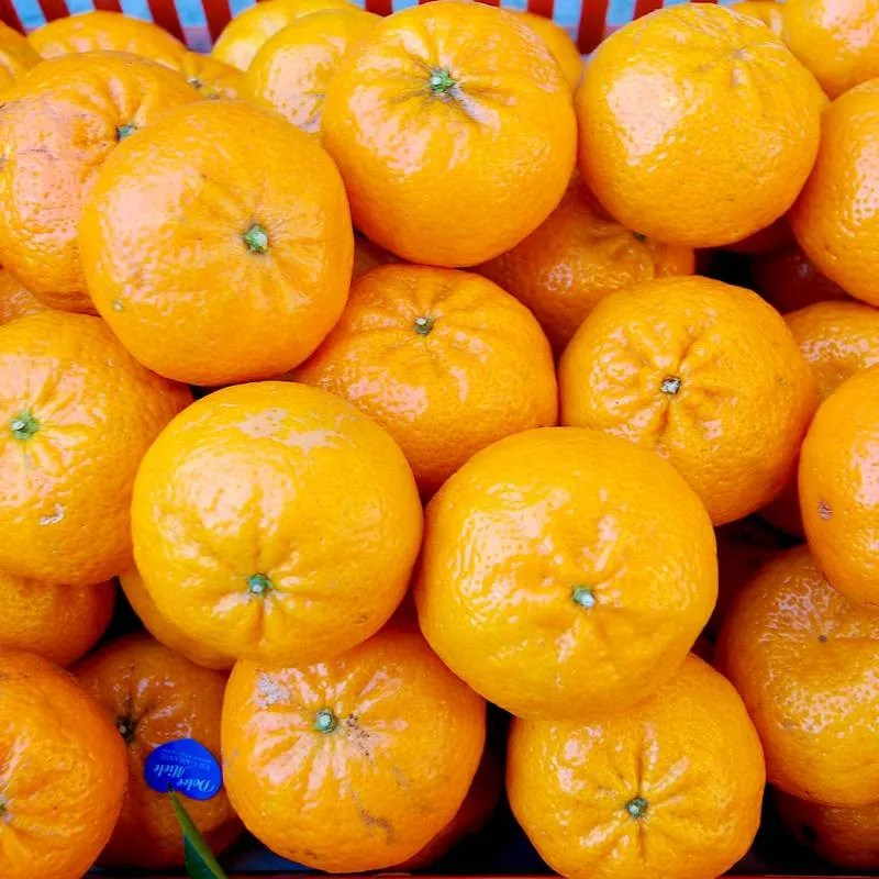 Mandarini Tabasso 01