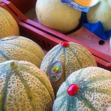 Melone Retato Tabasso