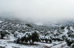 Nieve en el Olivar.