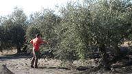 Balance del olivar