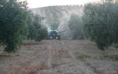 Tractor sulfatando en un olivar