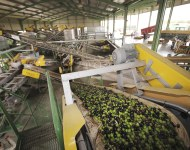 industria agroalimentaria, fabrica de aceituna.