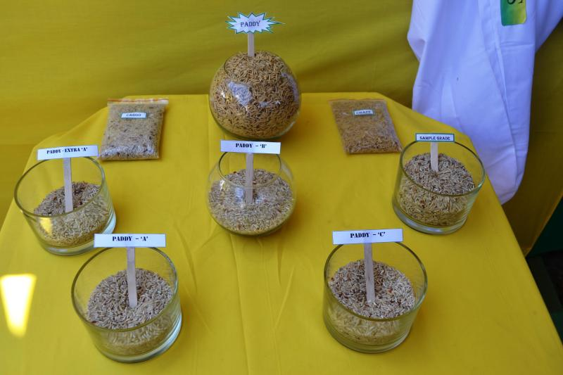 Some of the paddy available in Guyana on display at the Rupununi Agri and Business Expo