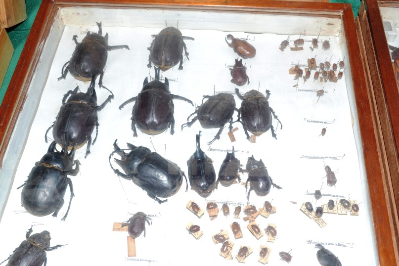 Different species of insects on display at NAREI's Entomology Section