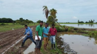 Extension officers carrying out flood assessments in Region Two rice farming areas.