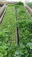 Three simple steps to having a kitchen garden