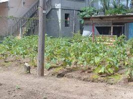 Rural Affairs Secretariat launches COVID19 Relief Kitchen Garden Initiative