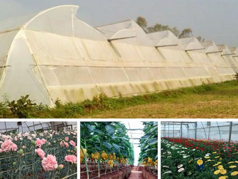 greenhouse farming