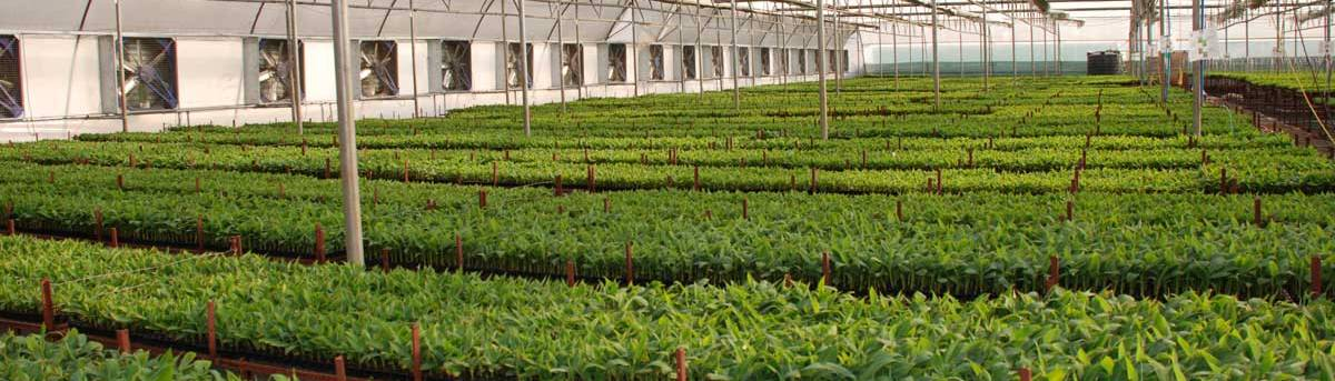 Greenhouse Farming in India (beginner guide 2019)