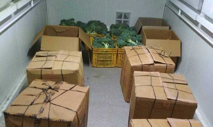 broccoli packing