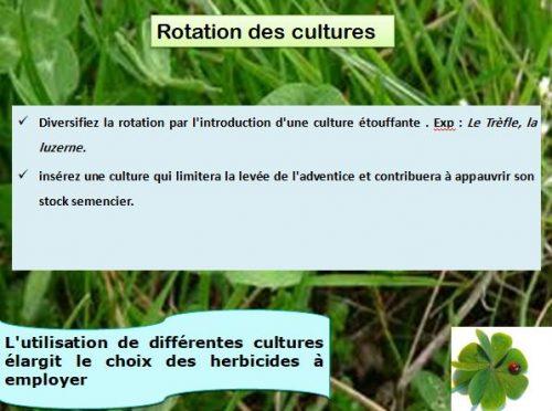 Rotation des Cultures