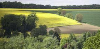 developpement rural en algerie