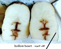 مرض القلب الاجوف للبطاطا