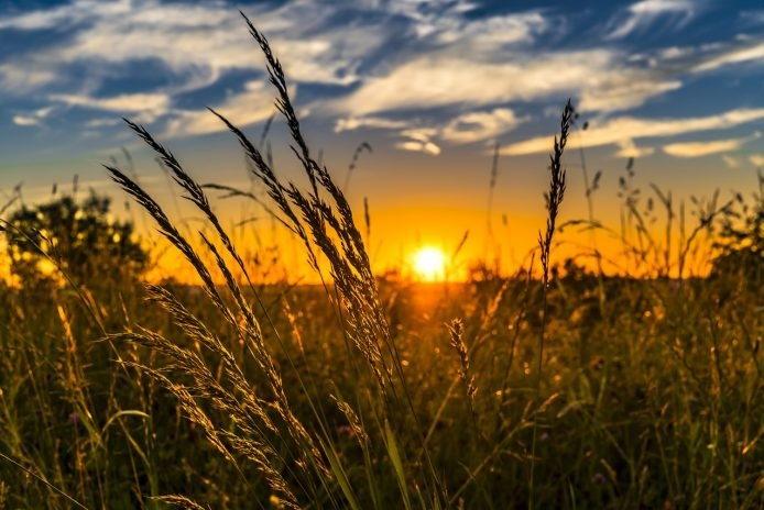 Quelques Eléments pour la Compréhension du Développement Rural Durable en ALGÉRIE