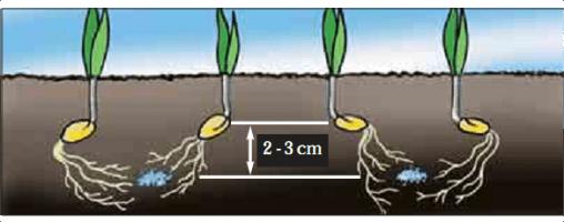 agriculture conservation - profondeur ideal des grains
