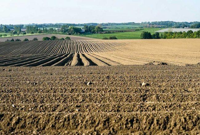 Politiques Foncières et Les Spécificités du Secteur Agricole en Algérie