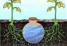Peut être le futur système d'arrosage de nos potagers surélevés?