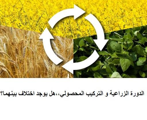 الدورة الزراعية و التركيب المحصولي،،هل يوجد اختلاف بينهما؟