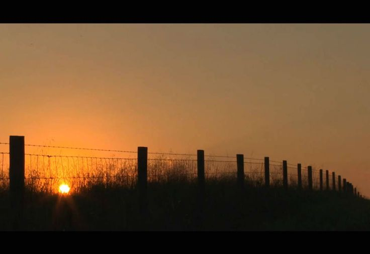 Ranch Fence Line - Angus