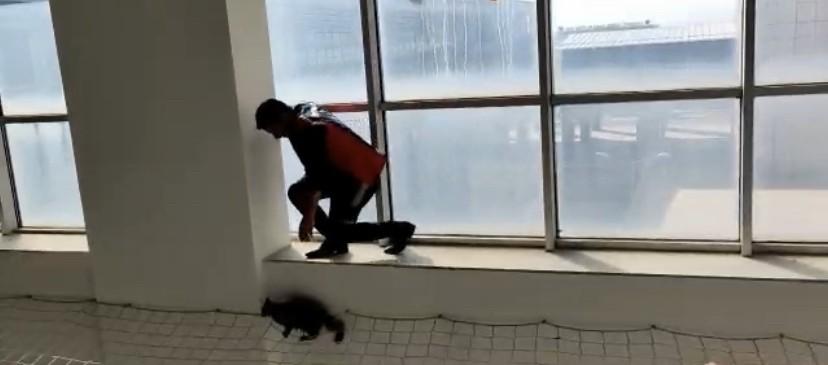 Hastanede mahsur kalan kedi itfaiye ekipleri tarafından kurtarıldı