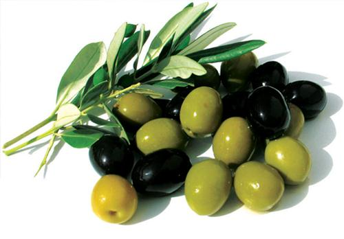 Important diseases of the olive and their management through fungicides and Biocontrol.