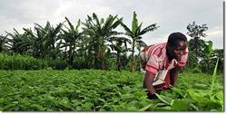 Africa-Farmer_tending