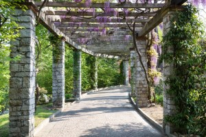Horticulture-magazine-wisteria-vine-1024x683