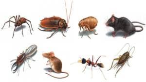 Pest-Control-01