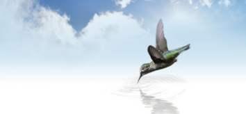 hummingbird-73