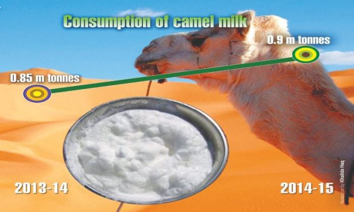 Growth trends in camel market