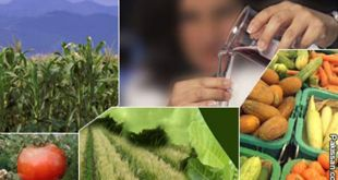 promotion-of-agriculture-sector-in-pakistan-by-saad-ur-rehman-malik