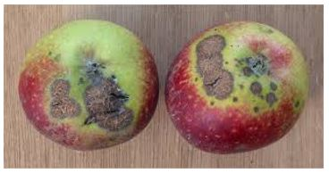 Innovative strategies for the control of apple scab