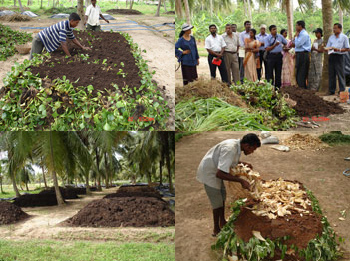 Preparation and use of Natural fertilizer for organic crop production