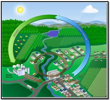 Biomass - 3