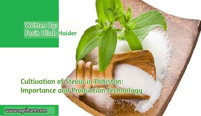 Cultivation of Stevia in Pakistan: Importance and Production Technology