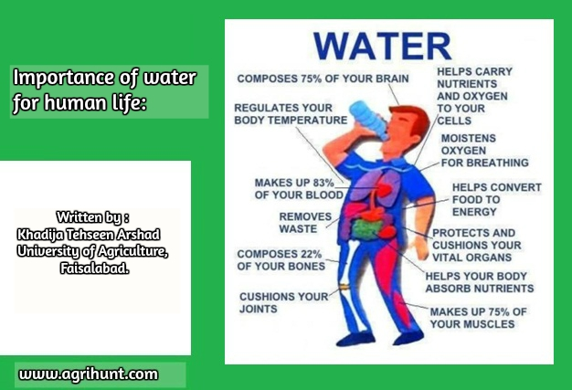 Importance of water for human life.