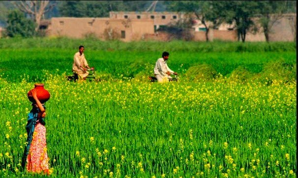 GREEN REVOLUTION AND ITS CONSEQUENCES INPAKISTAN